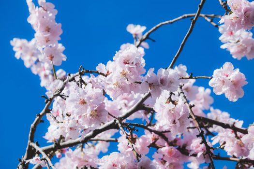 Frühjahrsfrische